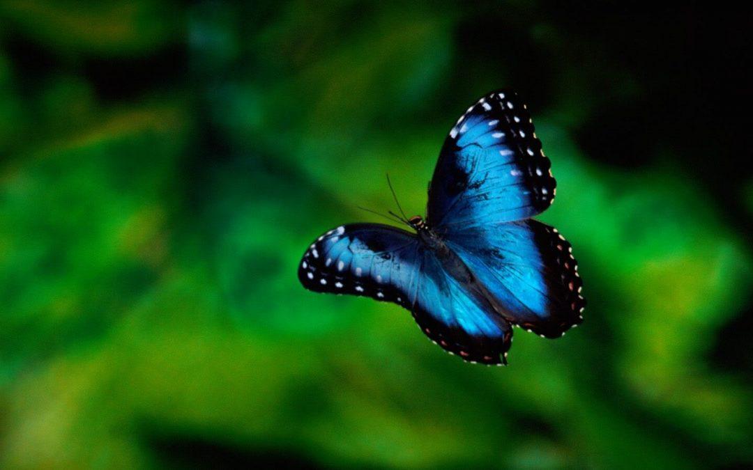 Het butterfly effect